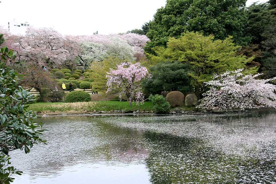 Bushido travel japan tour cherry blossom japan holiday